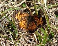 Day_99_-_Butterfly.jpg
