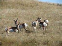 Day_9_-_Antelope.jpg