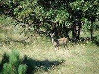Day_9_-_WY_Deer.jpg