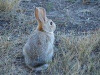 Day_9_-_WY_Rabbit.jpg