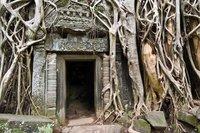 Ta Prohm doorway with tree