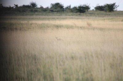 KalahariBlog05.jpg