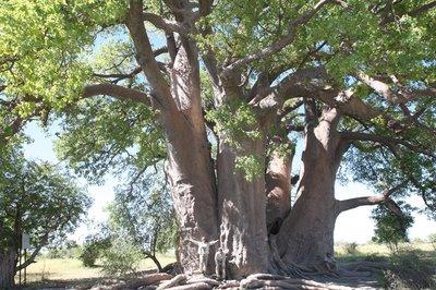 KalahariBlog35.jpg