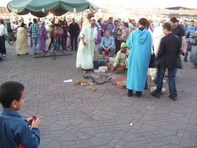 Snake_Char..rrakesh.jpg