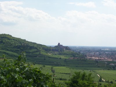 Soave Castle and the many vineyards!
