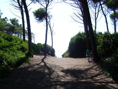 Wooded trail leading to beach, Cecina