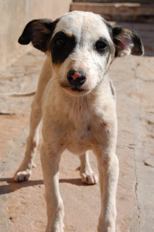 Stray Pup, Jodhpur
