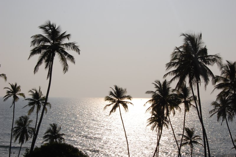 Palm trees along Arabian sea