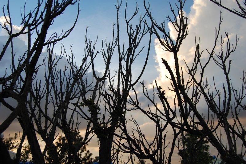 Leafless Tree Autumn