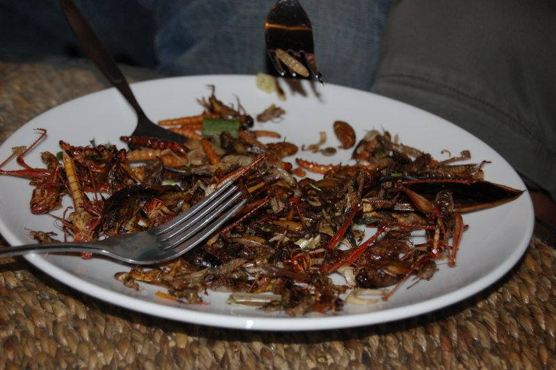 Insect Delicacies
