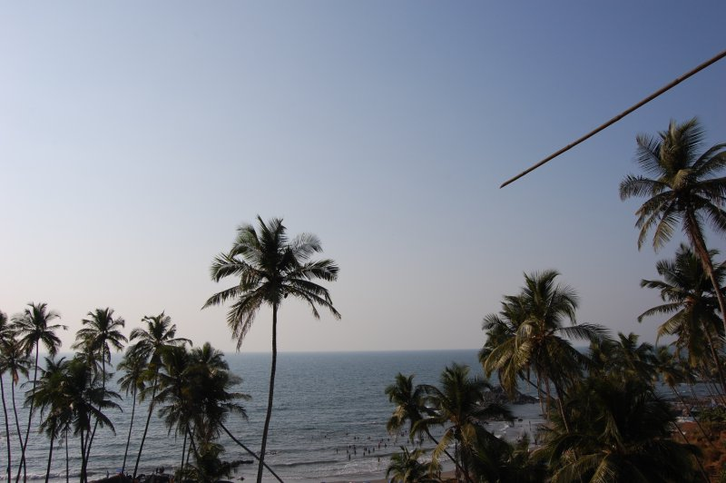 Palm trees along Arabian Sea