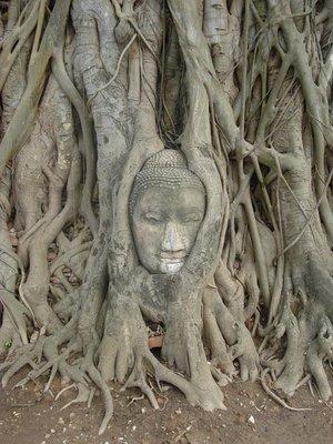 ayuthaya_buddha_tree.jpg