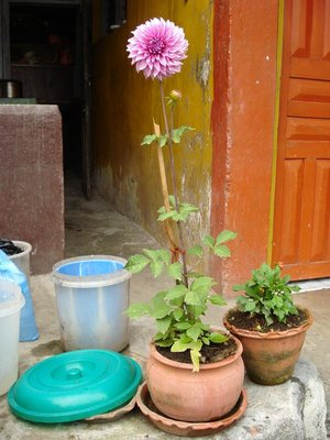 buddha_flower.jpg