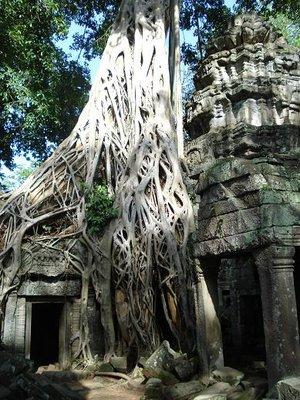 camb_tree.jpg
