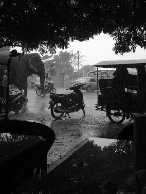 cambod_bike_elephant7.jpg