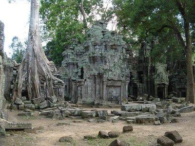 cambod_templetree.jpg