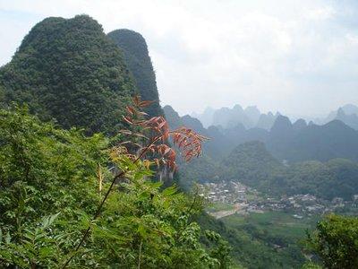 china_yang_hilltop.jpg