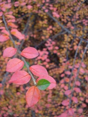 copenhagen_leaves.jpg