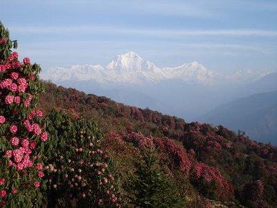 flowers_mountain.jpg