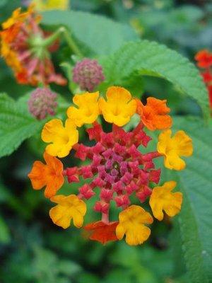 greece1_flower.jpg