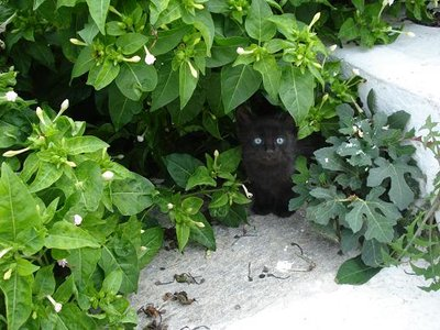 greece2cat_bushes.jpg
