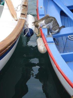 greece2catfishing2.jpg