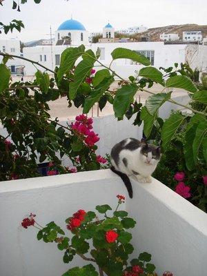 greece3catflowers.jpg