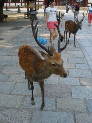 japan_deers.jpg