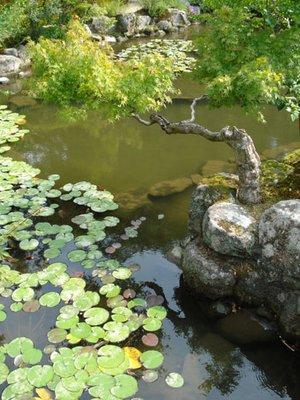 japan_gardenLpads1.jpg