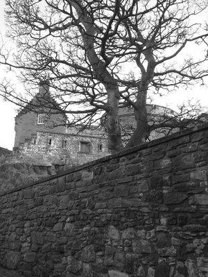 scotland_castle_tree.jpg