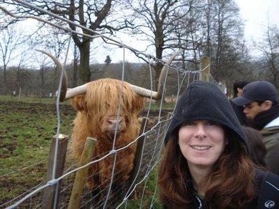 scotland_cow.jpg