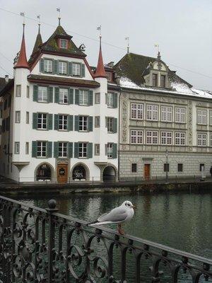switzerland_seagull.jpg