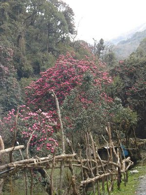 trek_red_trees1.jpg