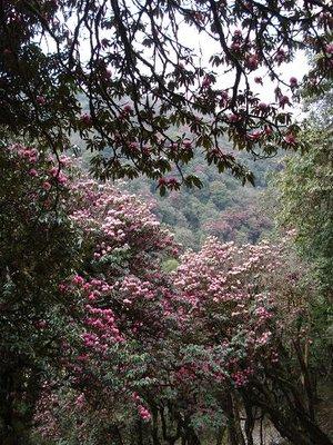 trek_red_trees2.jpg