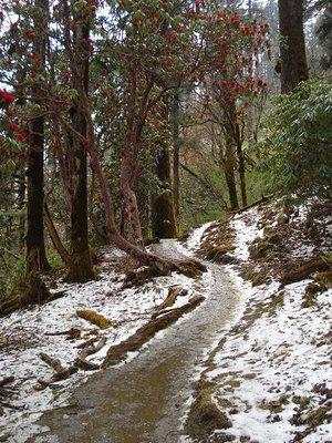 trek_snow_path.jpg