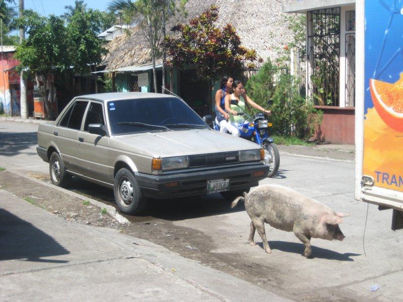 Pig Traffic