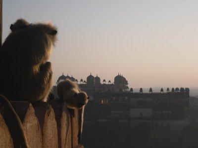Monkeys and Palaces
