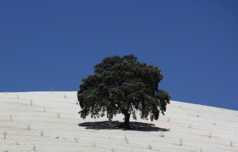 Andalusia_01
