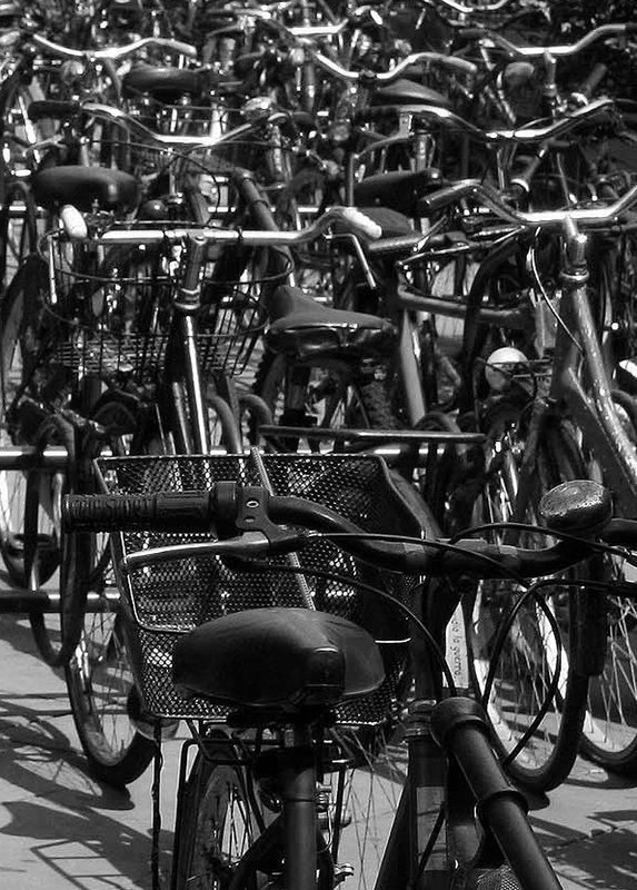 Bicycles in Florence.