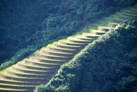 Rice terraces near Sapa