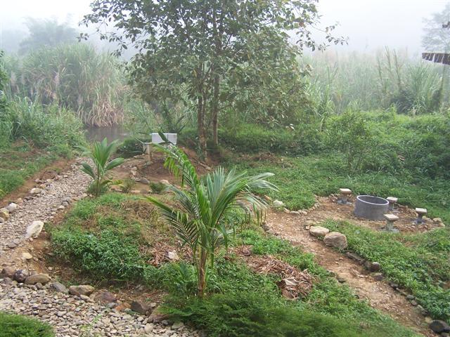 The beginning of a garden