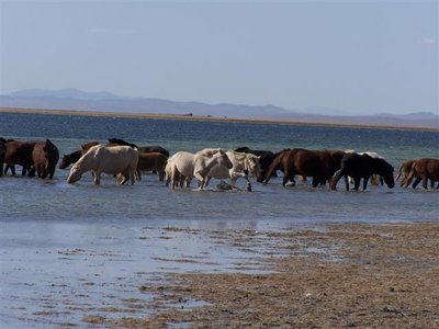 ogii_nuur_horses.jpg