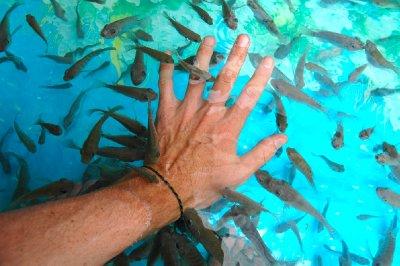 Fish massage