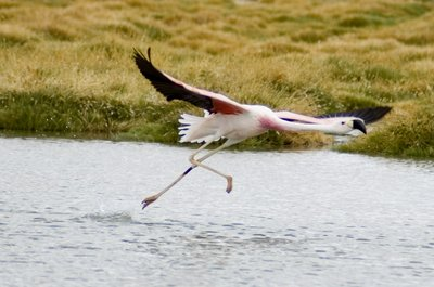flamingo1small.jpg