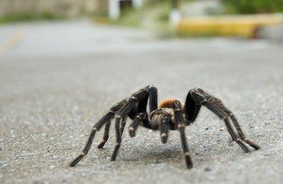 spider2small.jpg