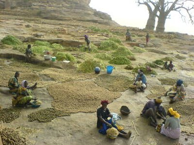 Onion work in Dogon Country