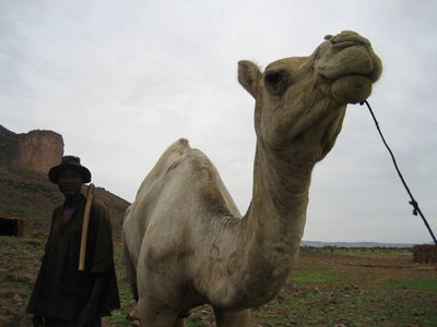 Mr Farmer and his Camel