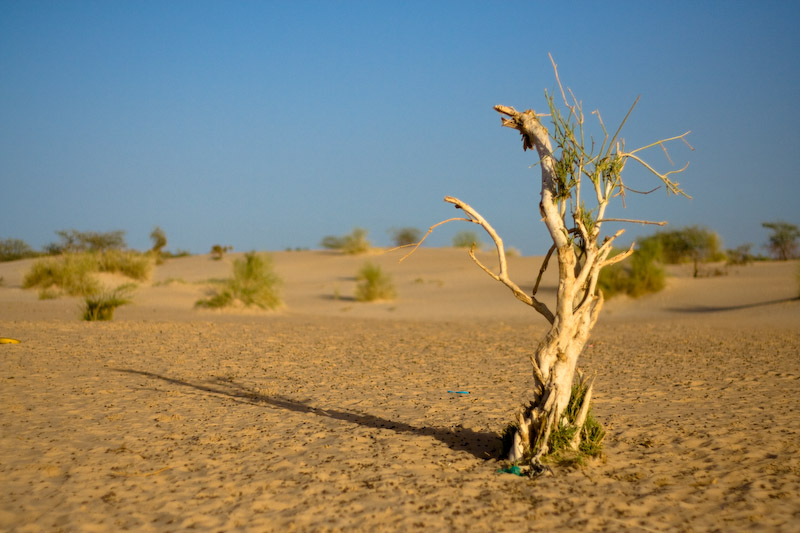 The start of the Sahara