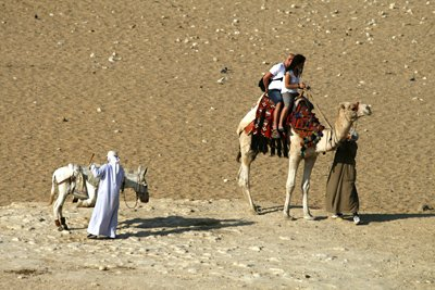 Camels and outs in the Egyptian desert