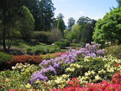 Rhodondendron Gardens near Melbourne